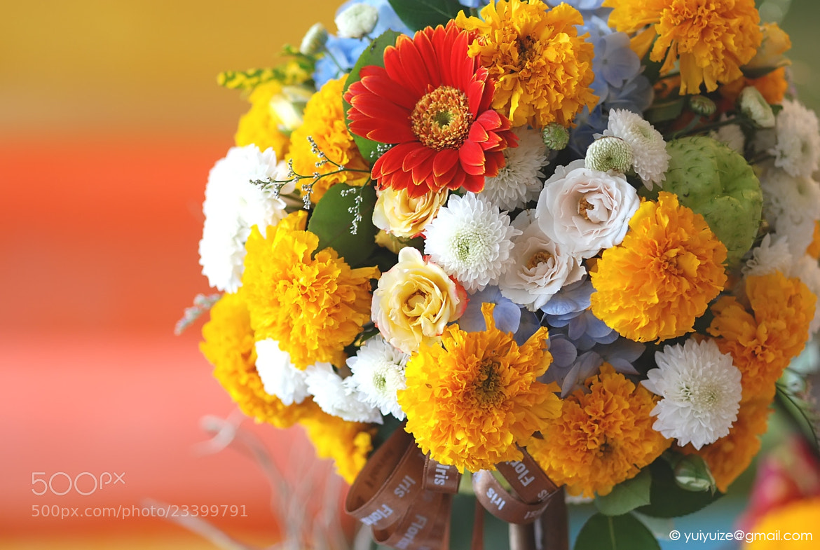 Photograph Flowers for You! by Pippins P. on 500px