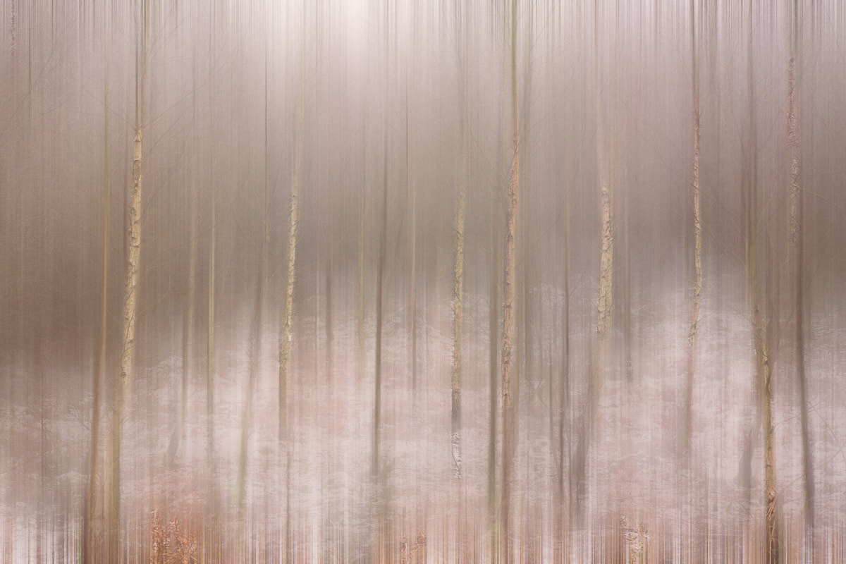 Photograph Trees and Snow by Penny Myles on 500px