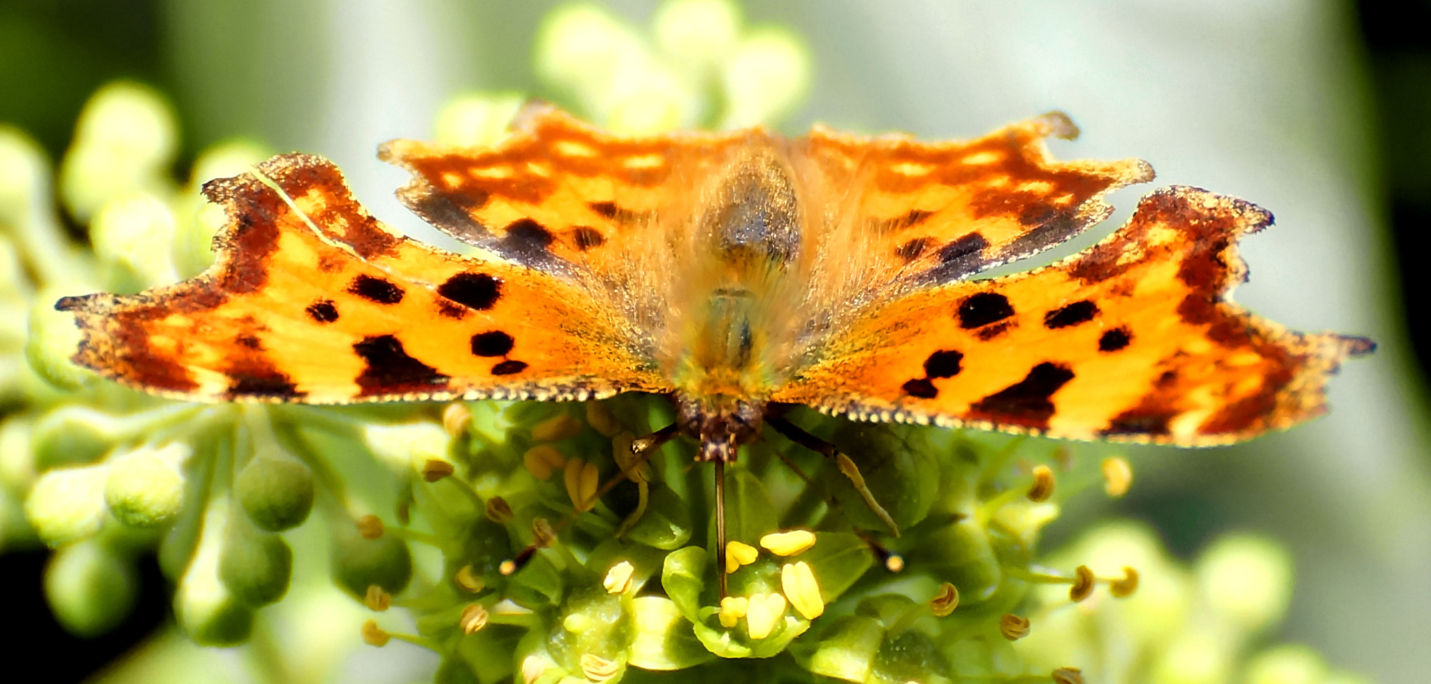 Photograph Comma 2 by DAVID GAHAN on 500px