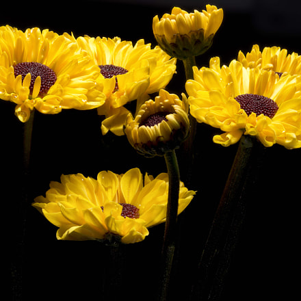 Daisies. Stack of 30 photos.