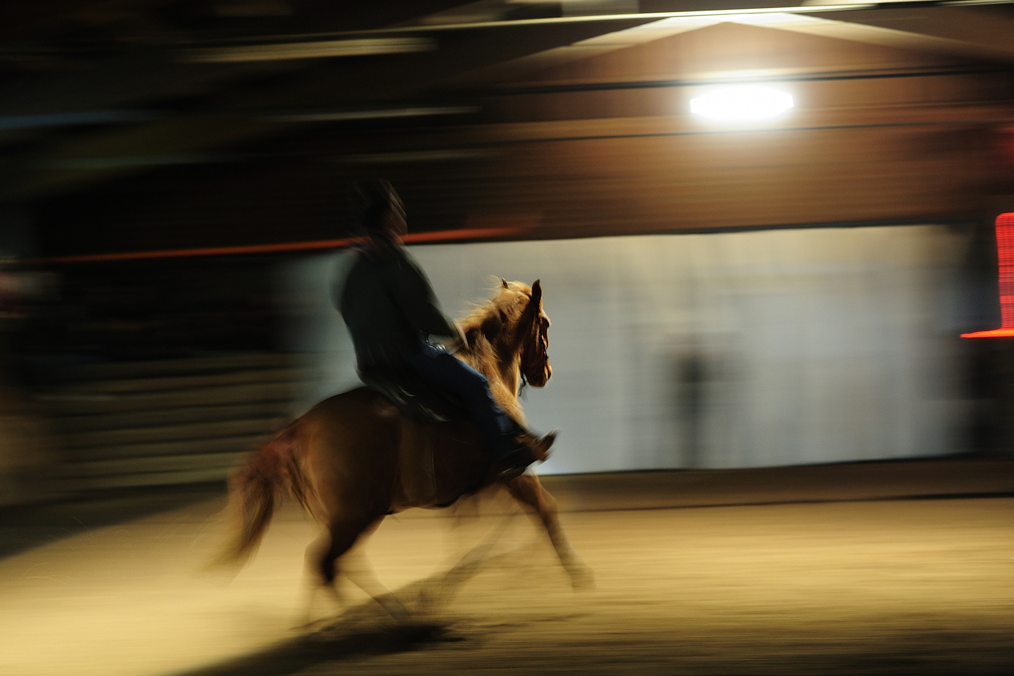 Photograph Fast Horse by Quadri Ulisse on 500px