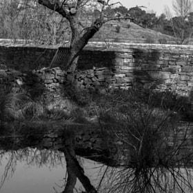 Reflex - Lines - Water