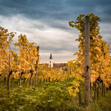 Vineyard chapel