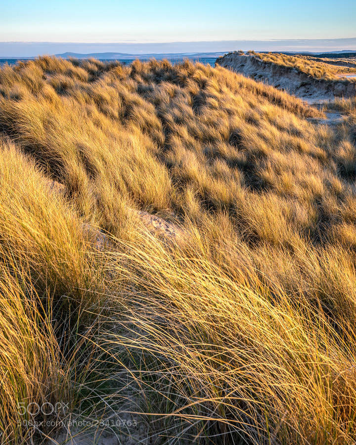 Wind blown dunes on the East Beach at Lossiemouth in Moray Scotland.