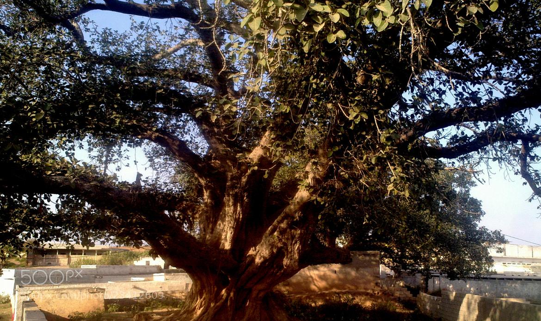 Photograph mapple tree by Mahmoud Akbar on 500px