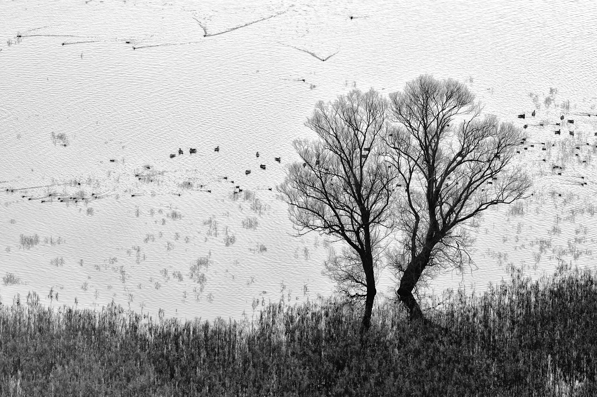 Photograph Trees and ducks by Lorenzo Cavalieri on 500px