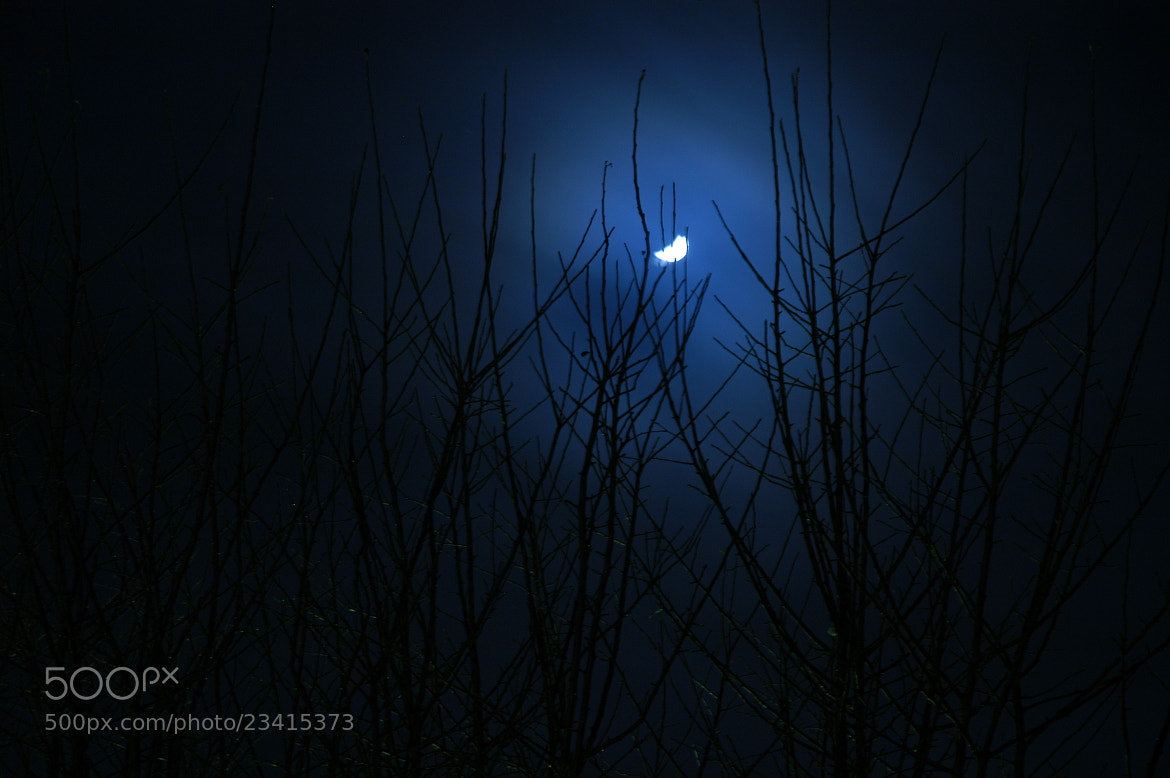 Photograph branches reaching for the moon by Kenneth Gysting on 500px