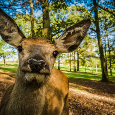 O my deer