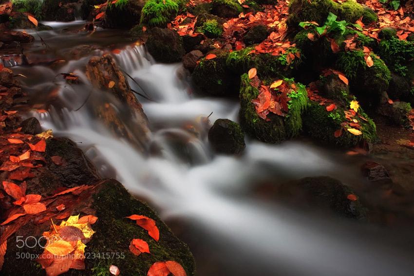 Photograph Autumn by ilker erdogru on 500px