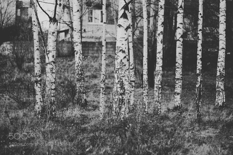 Photograph Berezka by Alexandra Fortuna on 500px