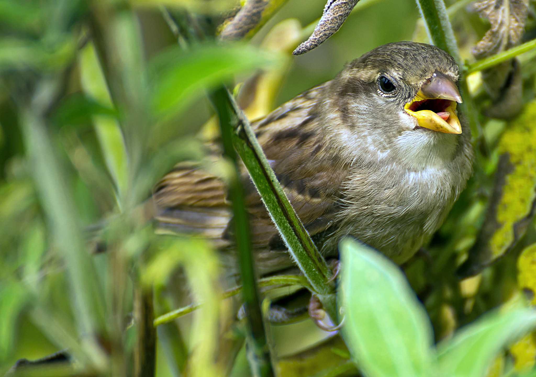 Photograph sparrow 2 by DAVID GAHAN on 500px