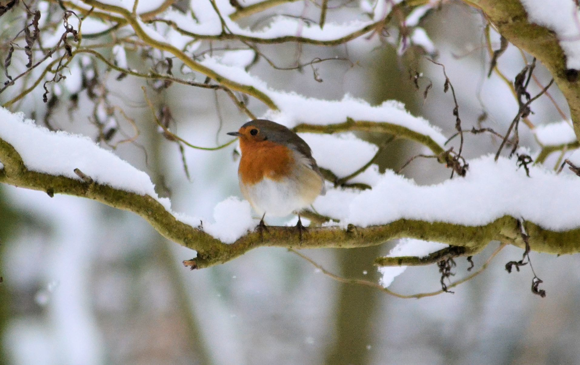 Photograph Redbreast by Heather Aplin on 500px