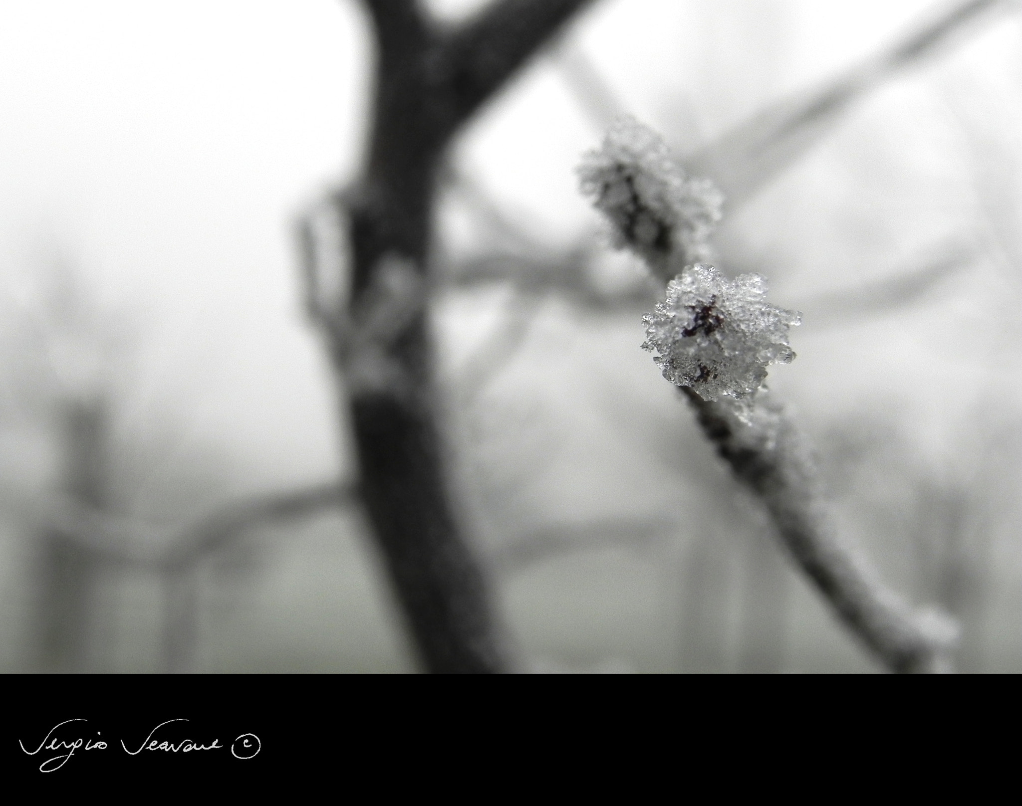 Photograph Inverno by Sergio Scavone on 500px