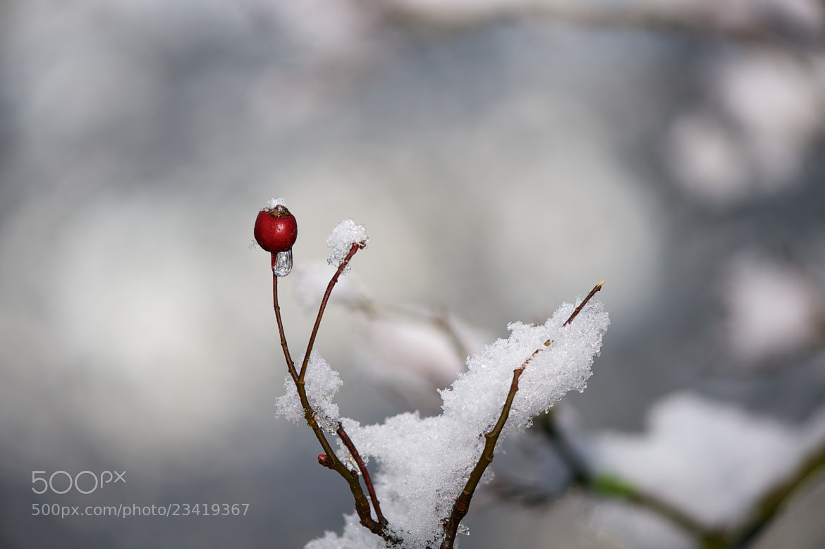 Photograph Snowberry by James Johnson on 500px