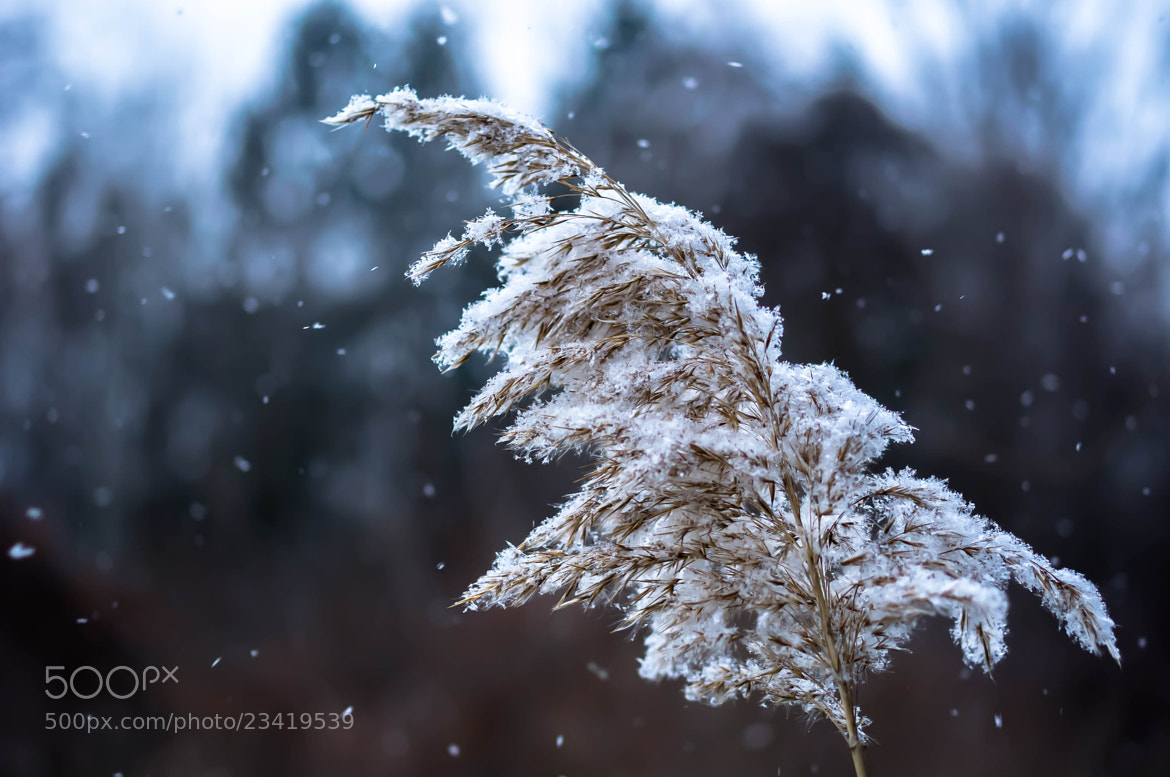 Photograph Gentle Winter Breeze by Corey Moore on 500px
