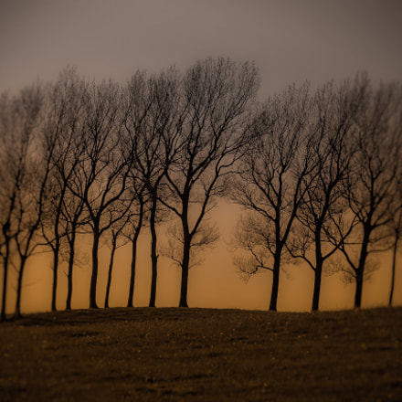 Trees with no leafs.