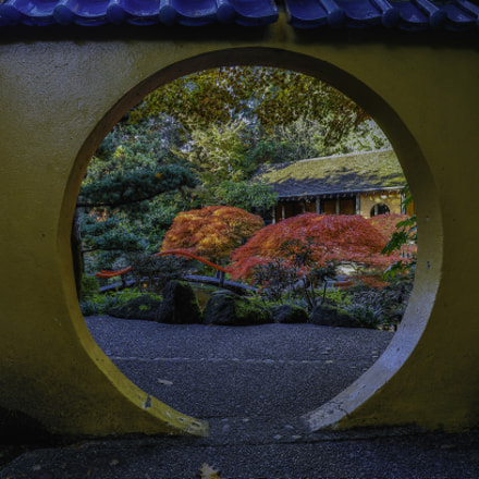 japanese maple tree and garden