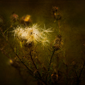 Thistle and Thorns by Eric Henderson (EH_Photos)) on 500px.com