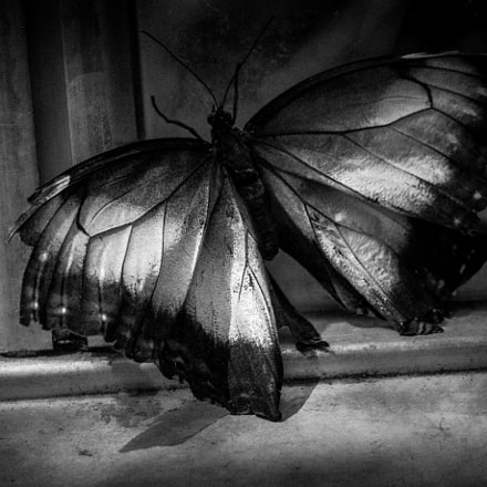Despair - Dreams of a life not lived.