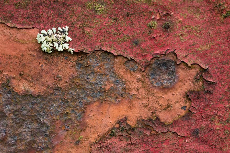 Lichen on rust