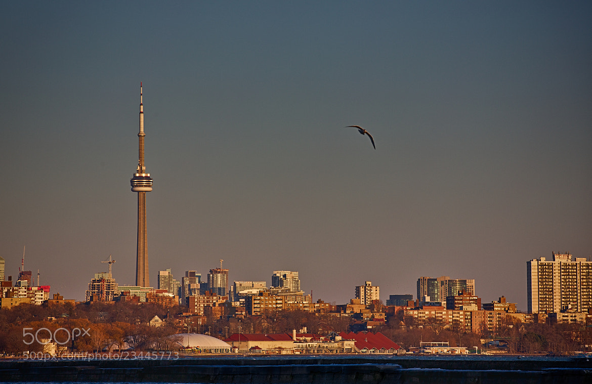 Photograph Toronto by Geff Borges on 500px