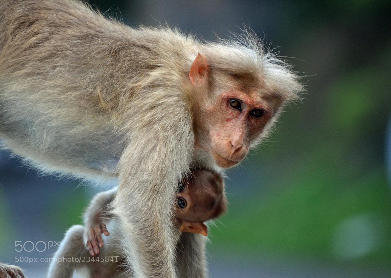 Photograph Hide & Seek by Gopal Kumarappan on 500px