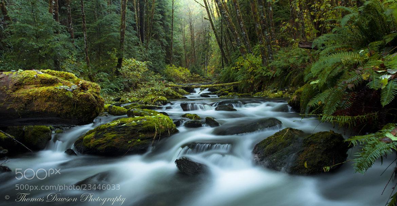 Photograph My Secret Paradise - Pure Nature by Thomas Dawson on 500px
