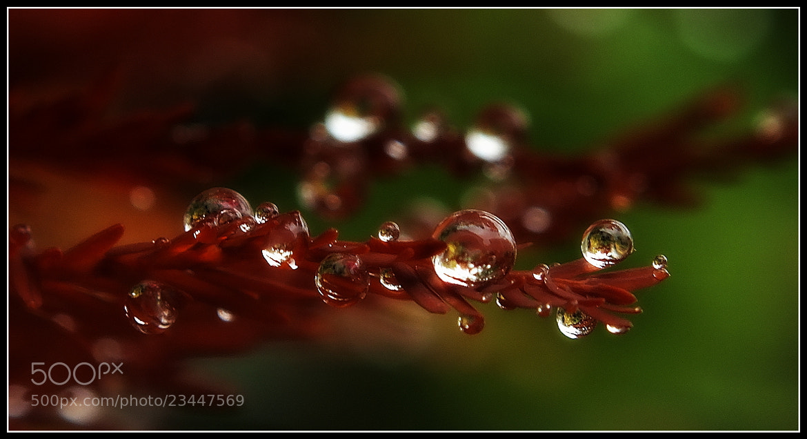 Photograph Droplets Displayed ... d by H. Becker on 500px