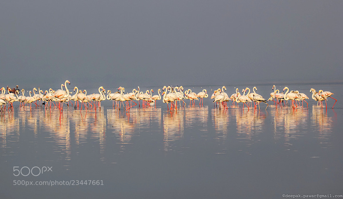 Photograph Social gathering by Deepak Pawar on 500px