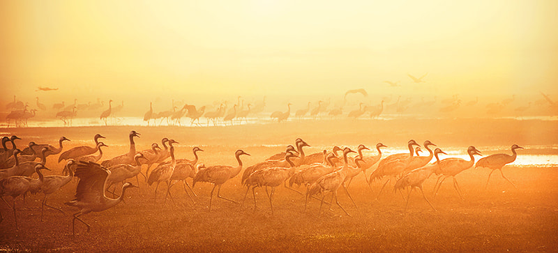 Photograph The Long Journey Home by Tomer Merav on 500px