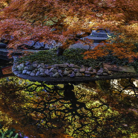 A two sided Japanese maple tree reflection