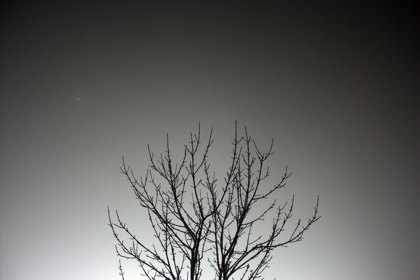 Photograph Tree in a Foggy night by MC Au on 500px