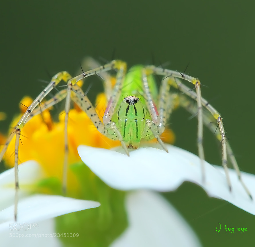 Photograph Supermodel by bug eye :) on 500px