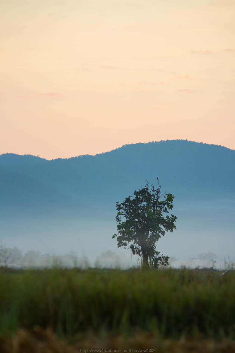 Photograph The Tree by Eakkapon Wipobpat on 500px
