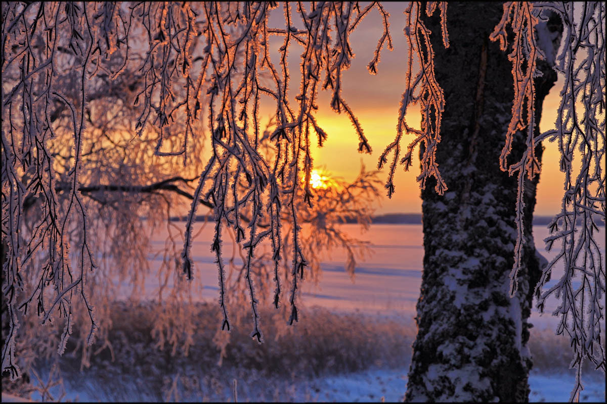 Photograph Winter morning in Finland ... by Valtteri Mulkahainen on 500px