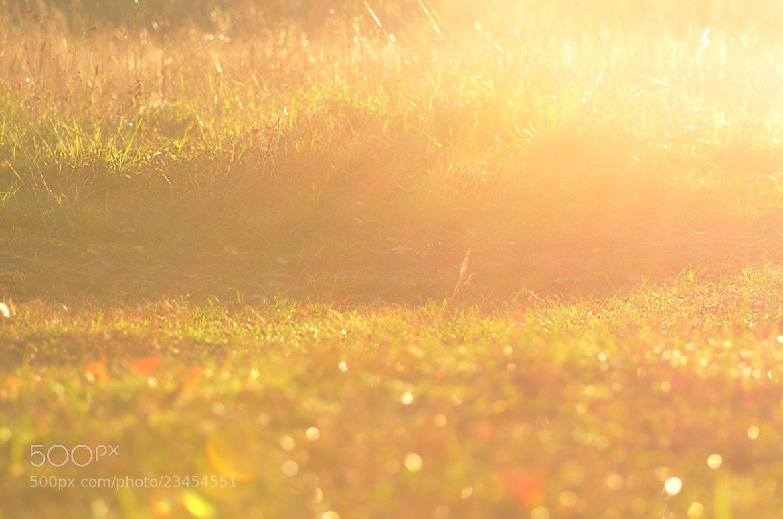 Photograph Sunset by derevnja on 500px