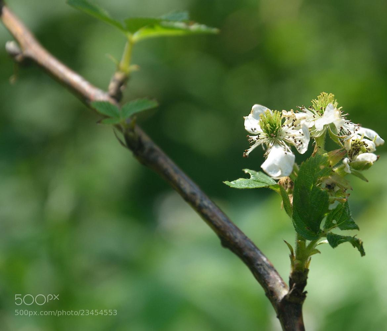 Photograph flower by derevnja on 500px
