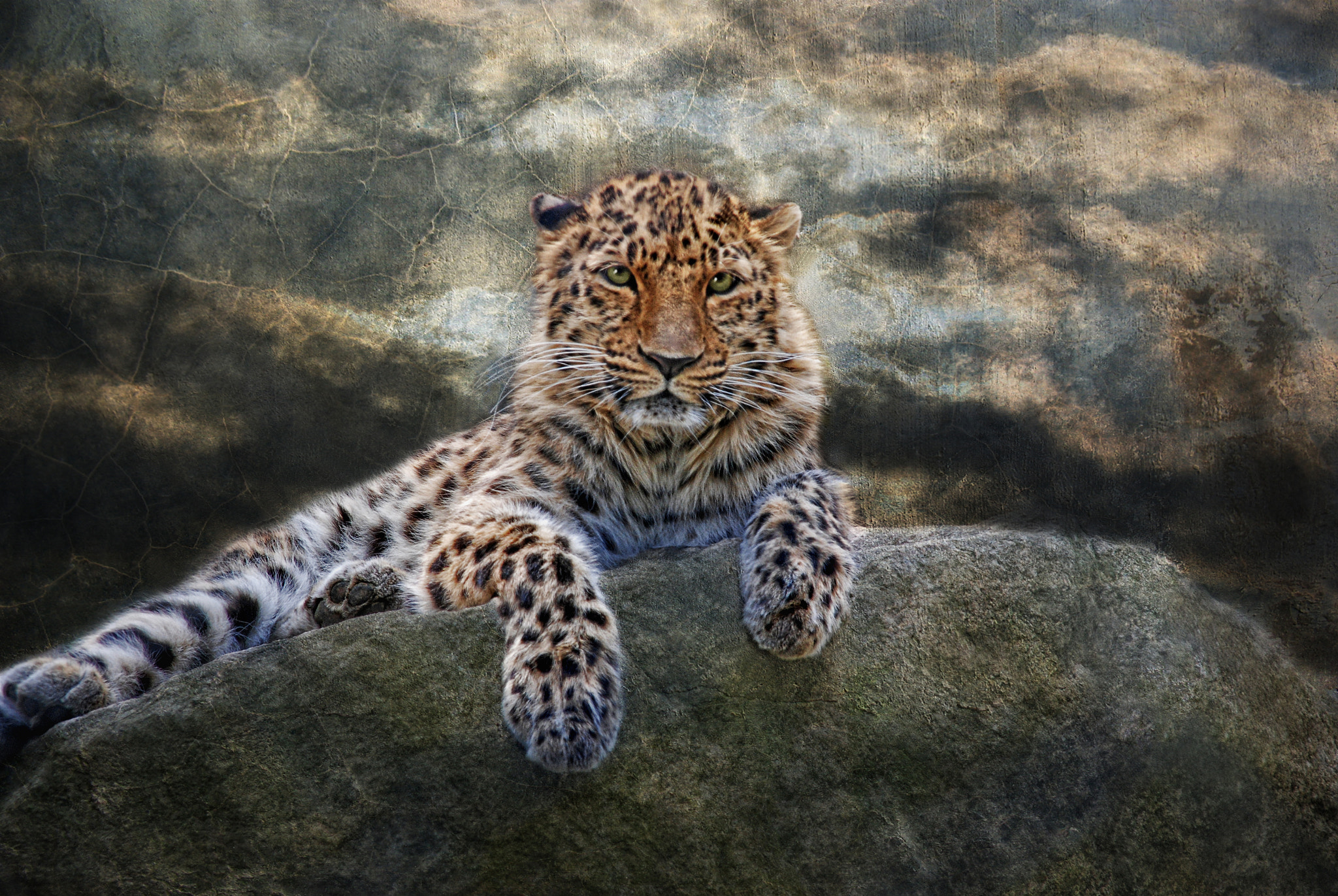 Photograph panthera II by Joachim G.  Pinkawa on 500px