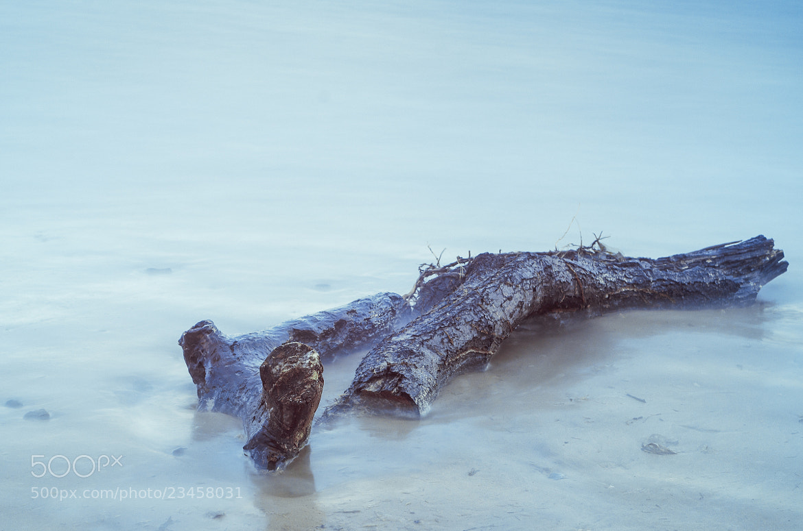 Photograph Driftwood by Tom  O'Leary on 500px