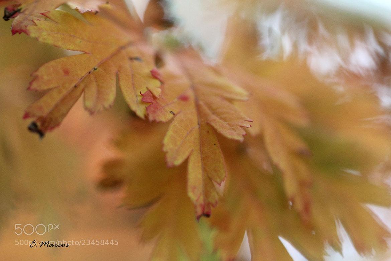 Photograph Un día de otoño by Edurne Marcos on 500px