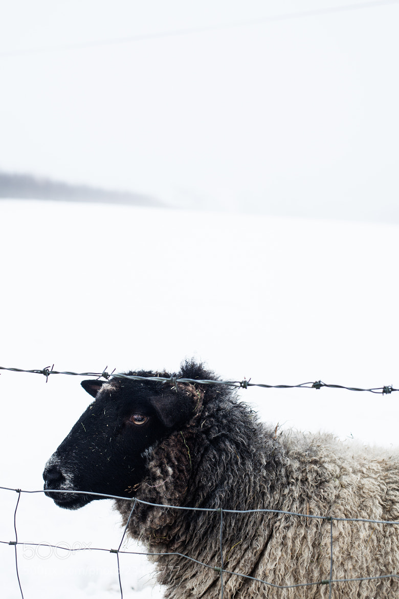 Photograph Icy Fleece by Morgan Wiltshire on 500px