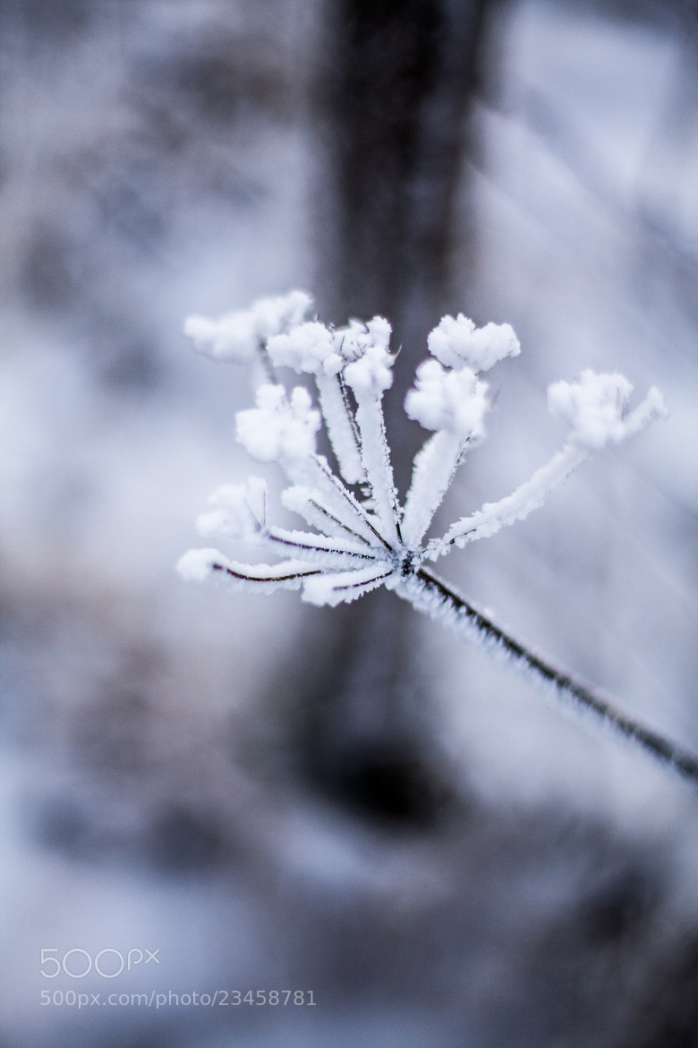 Photograph Iced Over by Morgan Wiltshire on 500px