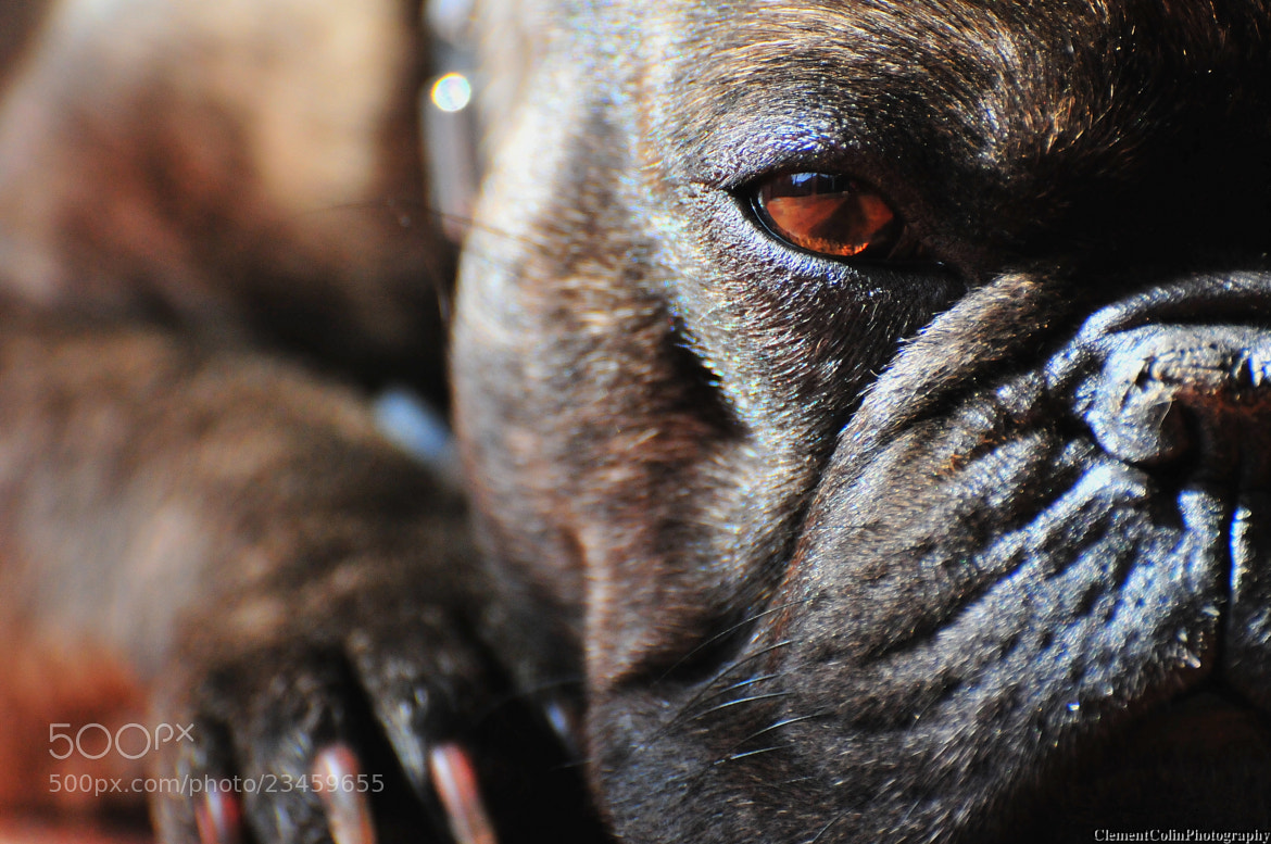 Photograph My lovely dog by Clément  Colin  on 500px