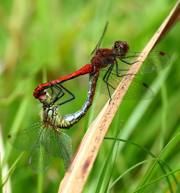 Photograph Dragonfly by Fotograf LindaElm on 500px