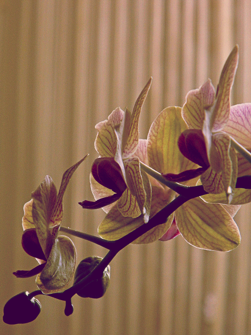 Photograph .The Orchid by Maryna  Mymohod on 500px