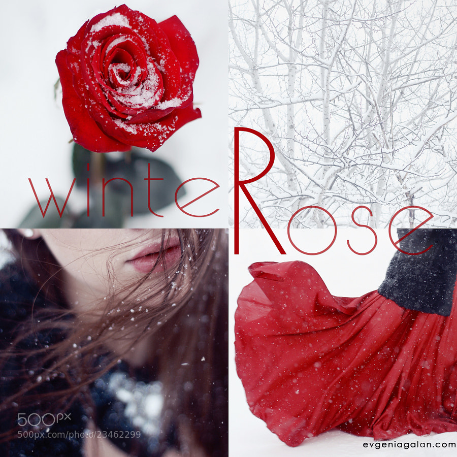whiteRose series