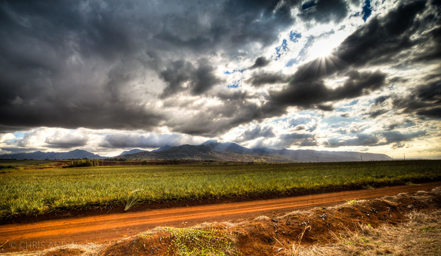 Photograph Pineapple fields forever by Chris Anderson on 500px