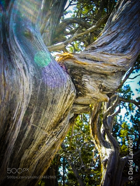 Photograph Looking Through Twisted Wood by David Lamberti on 500px