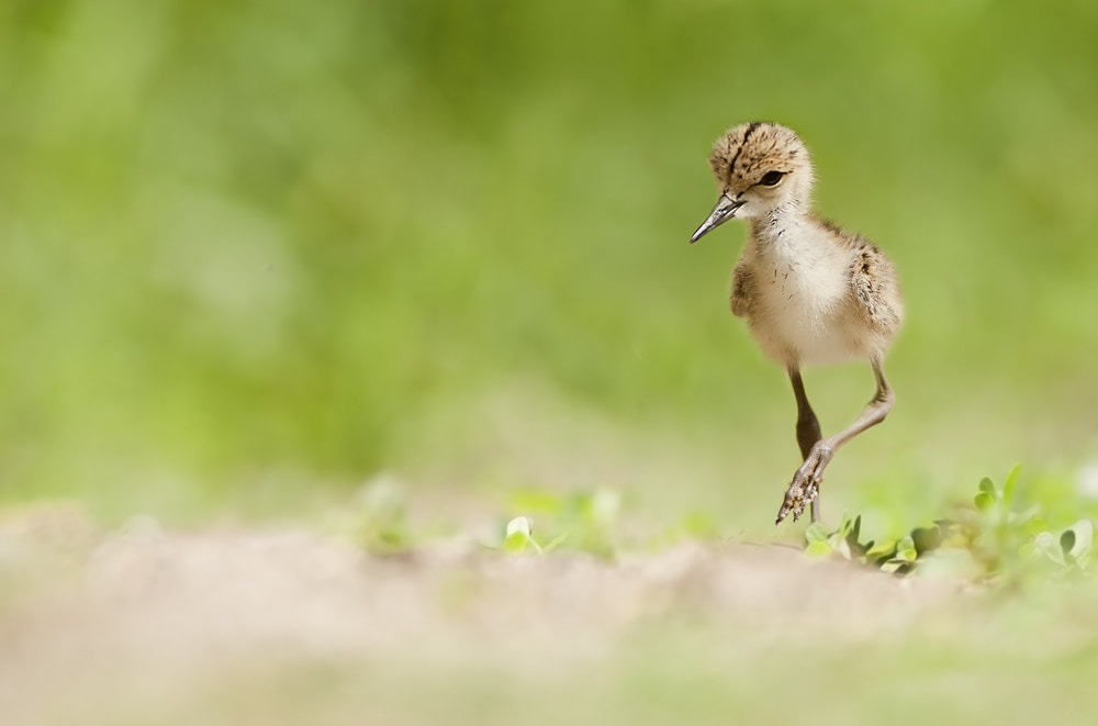 Photograph walking towards a new life by Stefano Ronchi on 500px