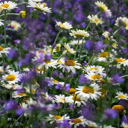 Flowers Colour